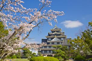 岡山城の桜の写真素材 [FYI03011908]