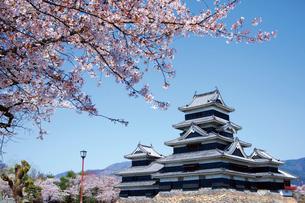 桜咲く松本城の写真素材 [FYI03012420]