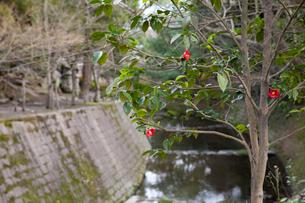 冬の仙巌園の写真素材 [FYI03012462]