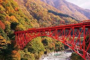 黒部峡谷トロッコ電車の写真素材 [FYI03012496]