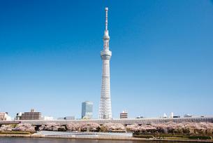 東京スカイツリーの写真素材 [FYI03012556]