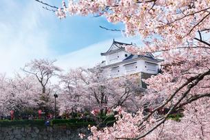 鶴山公園で催される津山さくらまつりの写真素材 [FYI03012696]