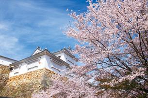 鶴山公園で催される津山さくらまつりの写真素材 [FYI03012698]