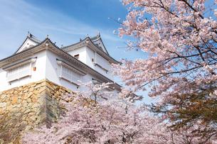 鶴山公園で催される津山さくらまつりの写真素材 [FYI03012701]