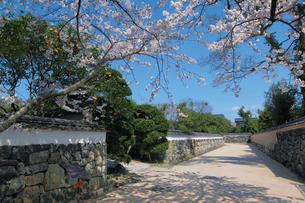 桜咲く萩城下町の堀内鍵曲の写真素材 [FYI03012710]