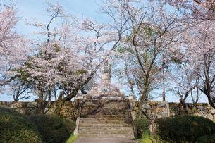 鶴山公園で催される津山さくらまつりの写真素材 [FYI03012750]