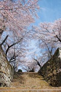 鶴山公園で催される津山さくらまつりの写真素材 [FYI03012752]