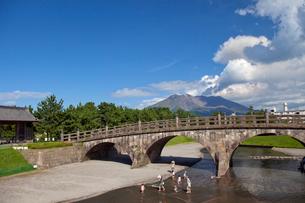 石橋記念公園 桜島の写真素材 [FYI03012993]