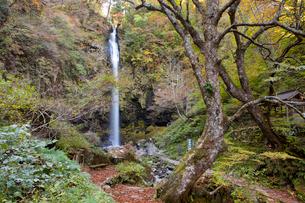 秋の阿弥陀ヶ滝の写真素材 [FYI03013026]