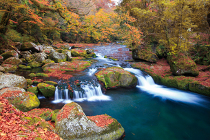 紅葉の菊池渓谷の紅葉ヶ瀬の写真素材 [FYI03013103]
