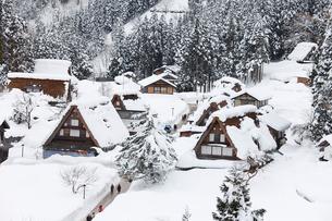 雪積もる五箇山の合掌造り集落の写真素材 [FYI03013111]