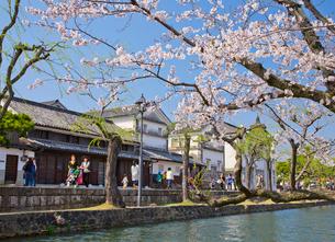桜咲く倉敷美観地区の写真素材 [FYI03013167]