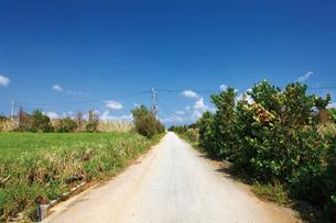 ヨロンマラソンの開催される与論島の道の写真素材 [FYI03013182]