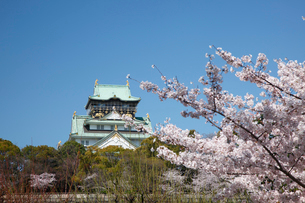 桜咲く大坂城跡の写真素材 [FYI03013197]