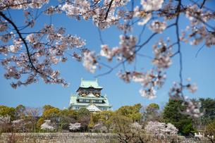 桜咲く大坂城跡の写真素材 [FYI03013208]