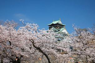 桜咲く大坂城跡の写真素材 [FYI03013211]