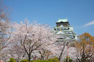 桜咲く大坂城跡の写真素材 [FYI03013214]