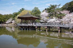 奈良公園鷺池に浮かぶ浮身堂と桜の写真素材 [FYI03013243]