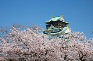 桜咲く大坂城跡の写真素材 [FYI03013254]