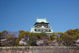 桜咲く大坂城跡の写真素材 [FYI03013256]