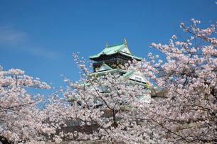 桜咲く大坂城跡の写真素材 [FYI03013258]