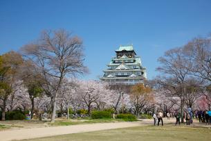 桜咲く大坂城跡の写真素材 [FYI03013259]
