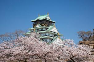 桜咲く大坂城跡の写真素材 [FYI03013260]