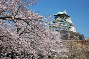 桜咲く大坂城跡の写真素材 [FYI03013261]