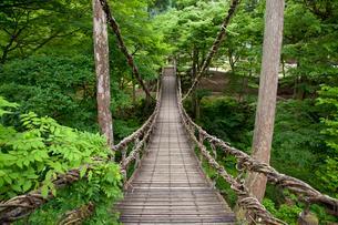 足羽川渓谷にかかる初夏のかずら橋の写真素材 [FYI03013503]