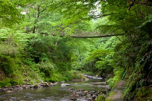 足羽川渓谷にかかる初夏のかずら橋と遊歩道の写真素材 [FYI03013509]