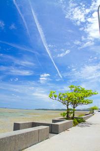 海中道路脇の干潟の写真素材 [FYI03013557]