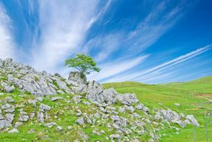 石灰岩が点在する四国カルスト県立自然公園の風景の写真素材 [FYI03013787]