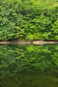 白神山地に点在する十二湖の鶏頭場の池の写真素材 [FYI03014296]