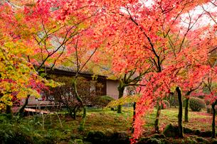 紅葉の美しい九年庵の写真素材 [FYI03014881]