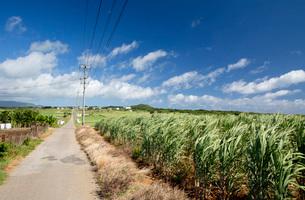 小浜島にてまっすぐ続くシュガーロードの風景の写真素材 [FYI03014915]