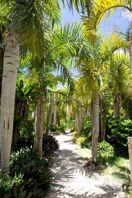 由布島亜熱帯植物園の風景の写真素材 [FYI03014942]