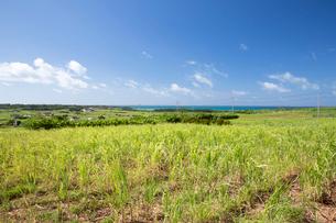 小浜島のサトウキビ畑の写真素材 [FYI03014963]