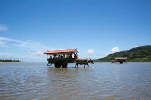 由布島と西表島の間を行き交う水牛車の写真素材 [FYI03015001]