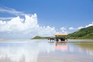 由布島と西表島の間を行き交う水牛車の写真素材 [FYI03015005]