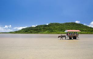 由布島と西表島の間を行き交う水牛車の写真素材 [FYI03015009]