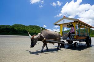 由布島と西表島の間を行き交う水牛車の写真素材 [FYI03015019]