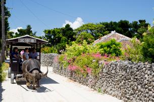 竹富島にて集落を行く水牛車の写真素材 [FYI03015083]