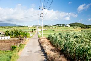 小浜島にてまっすぐ続くシュガーロードの風景の写真素材 [FYI03015137]