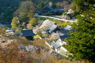 桜咲く総本山長谷寺の外舞台からの眺望の写真素材 [FYI03015480]