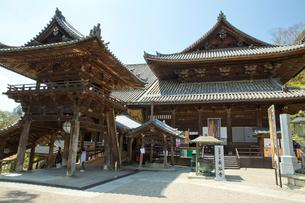 桜咲く総本山長谷寺の本堂の写真素材 [FYI03015485]