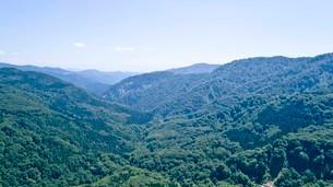 緑深い真夏の白神山地の写真素材 [FYI03015850]