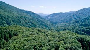 緑深い真夏の白神山地の写真素材 [FYI03015851]