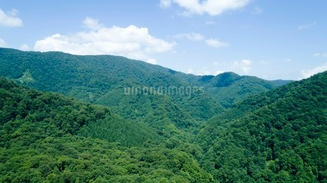 緑深い真夏の白神山地の写真素材 [FYI03015928]
