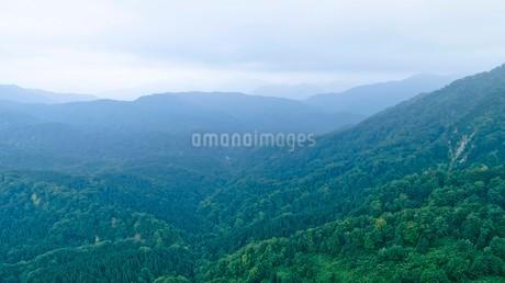 緑深い真夏の白神山地の写真素材 [FYI03015934]