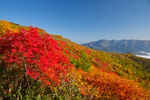 紅葉の美しい銀泉台の写真素材 [FYI03016568]